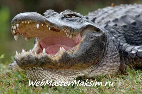 Индикатор аллигатор зверь, которого не следует бояться