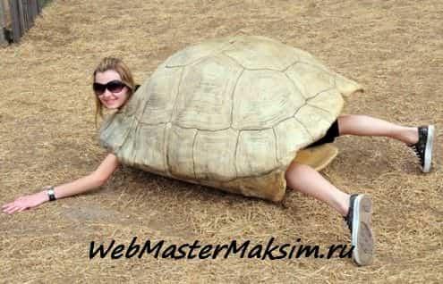Cтратегия черепахи - секретная система торговли - черепах