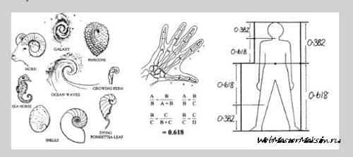 Последовательность Фибоначчи. Роберт Фишер, учение о применении вселенского знания на рынке.
